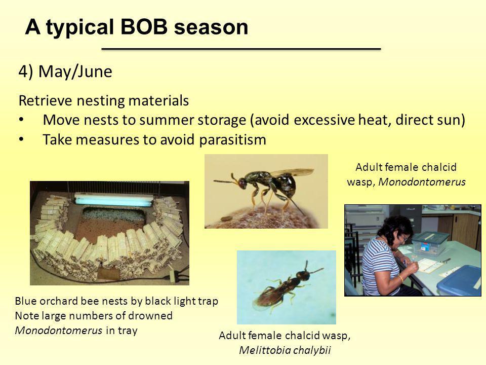 A typical BOB season 4) May/June Retrieve nesting materials