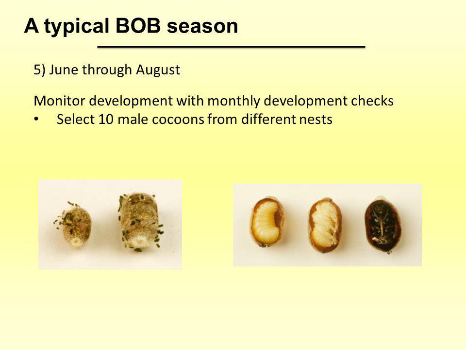 A typical BOB season 5) June through August