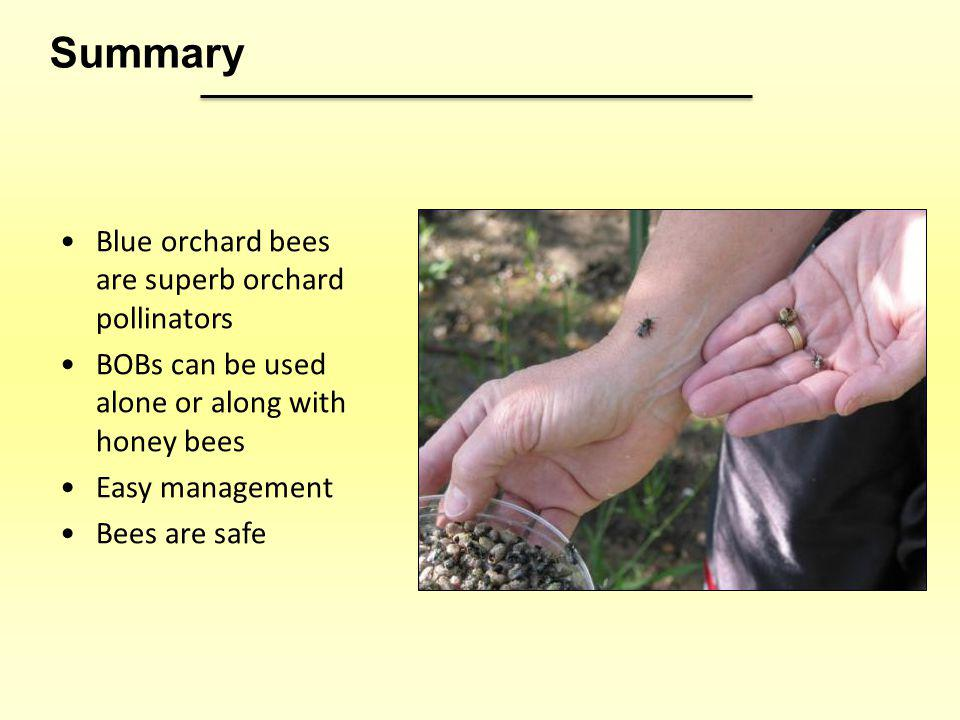 Summary Blue orchard bees are superb orchard pollinators