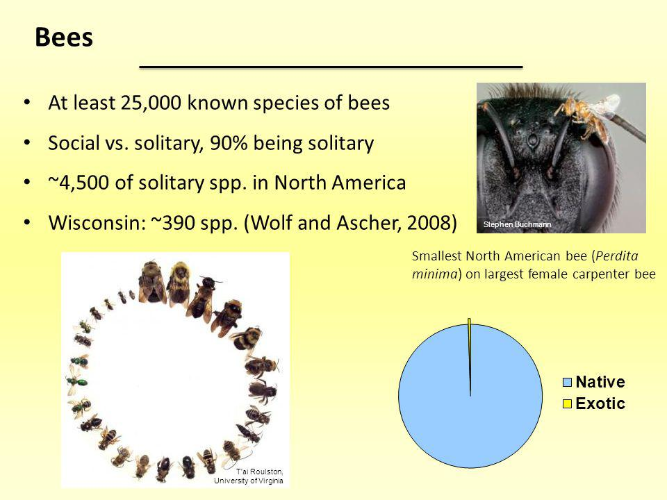 Bees At least 25,000 known species of bees