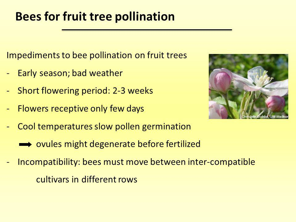 Bees for fruit tree pollination