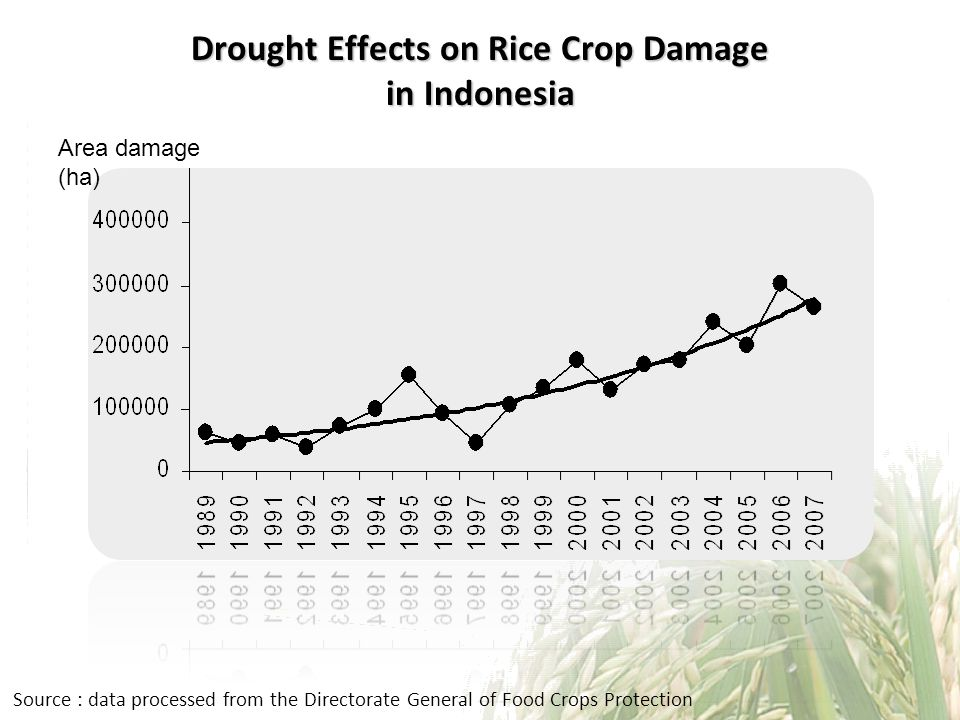 Drought Effects on Rice Crop Damage in Indonesia