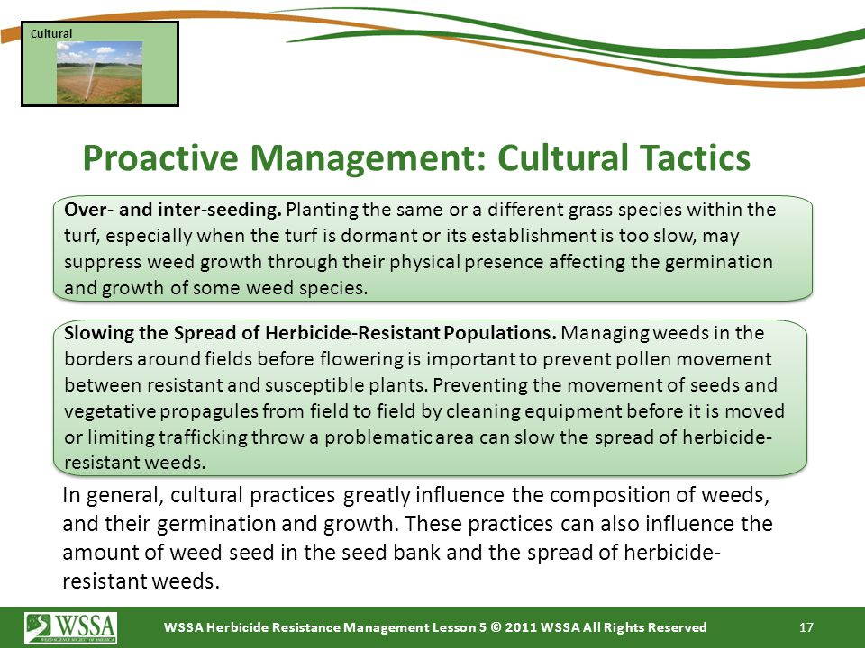 Proactive Management: Cultural Tactics