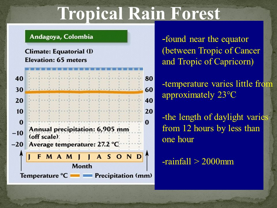 Tropical Rain Forest -found near the equator (between Tropic of Cancer and Tropic of Capricorn) -temperature varies little from approximately 23°C.