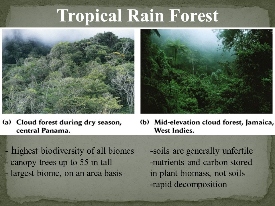 Tropical Rain Forest - highest biodiversity of all biomes