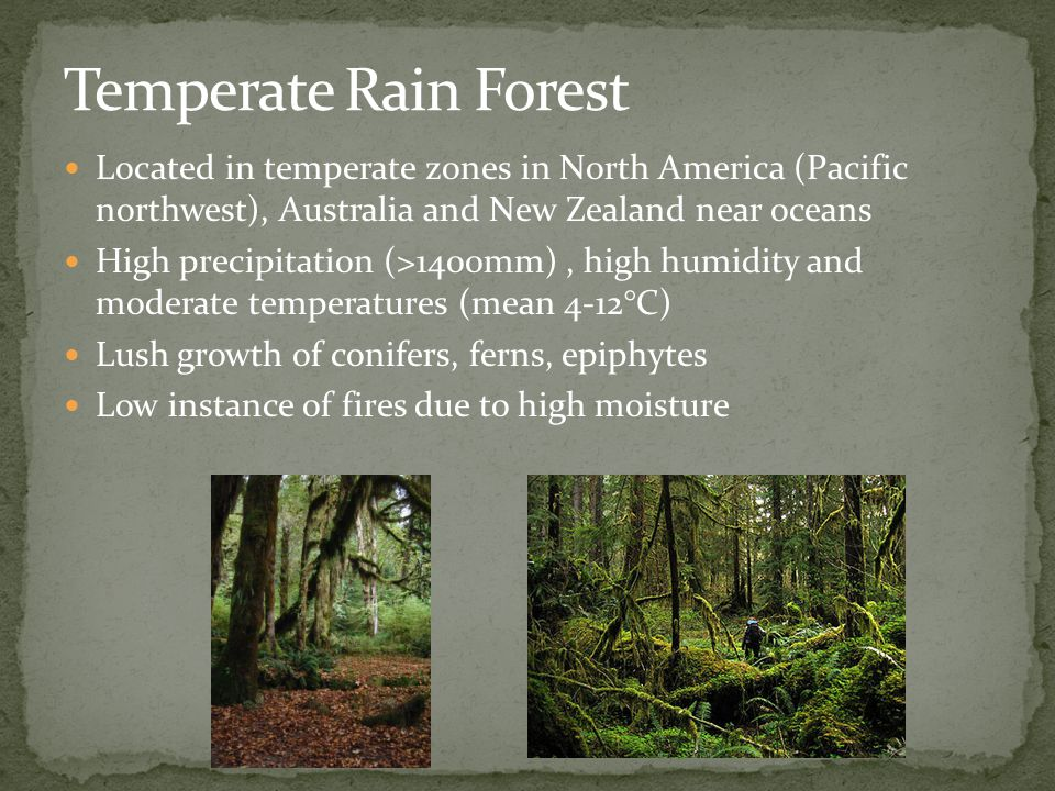 Temperate Rain Forest Located in temperate zones in North America (Pacific northwest), Australia and New Zealand near oceans.
