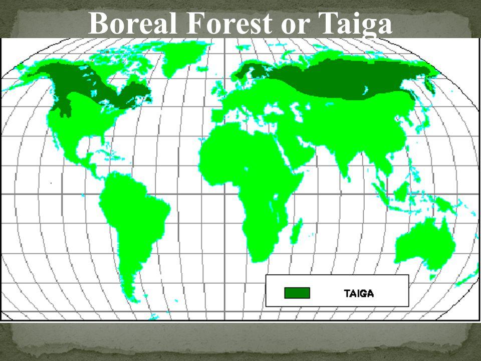 Boreal Forest or Taiga
