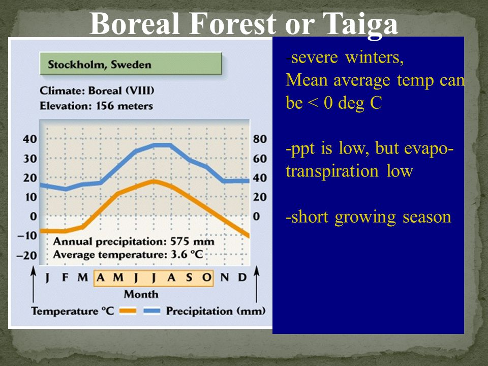 Boreal Forest or Taiga -severe winters,