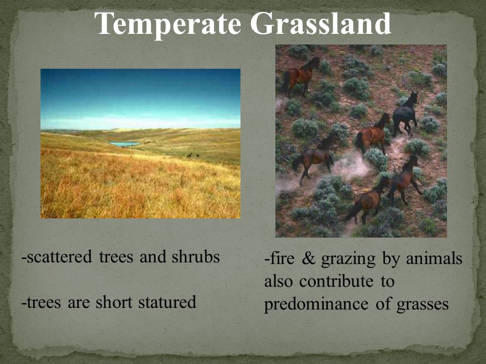 Temperate Grassland -scattered trees and shrubs