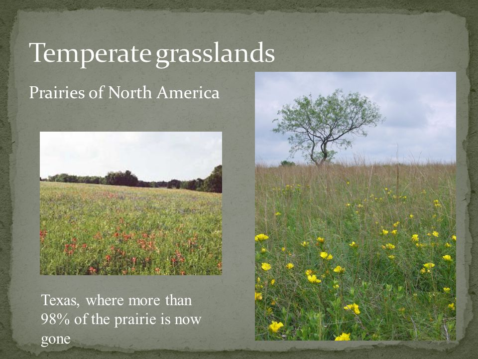 Temperate grasslands Prairies of North America