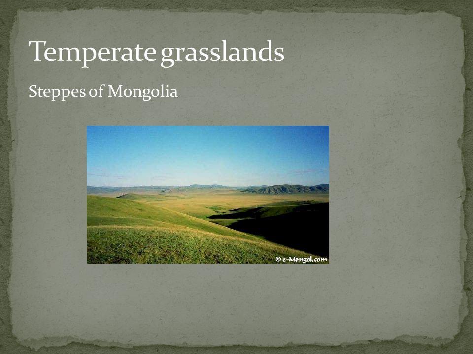 Temperate grasslands Steppes of Mongolia