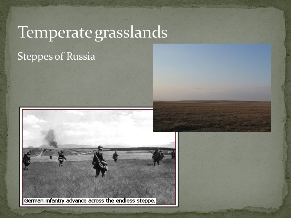 Temperate grasslands Steppes of Russia