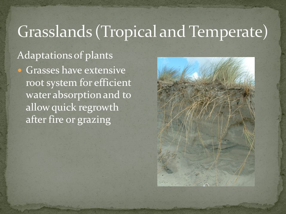 Grasslands (Tropical and Temperate)