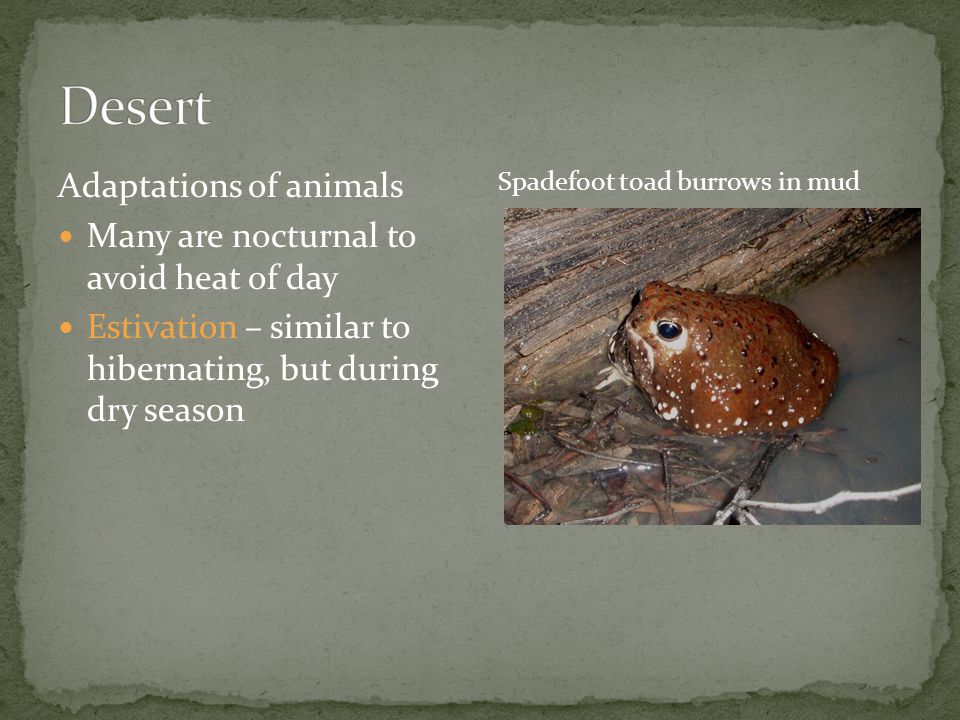 Desert Adaptations of animals Many are nocturnal to avoid heat of day
