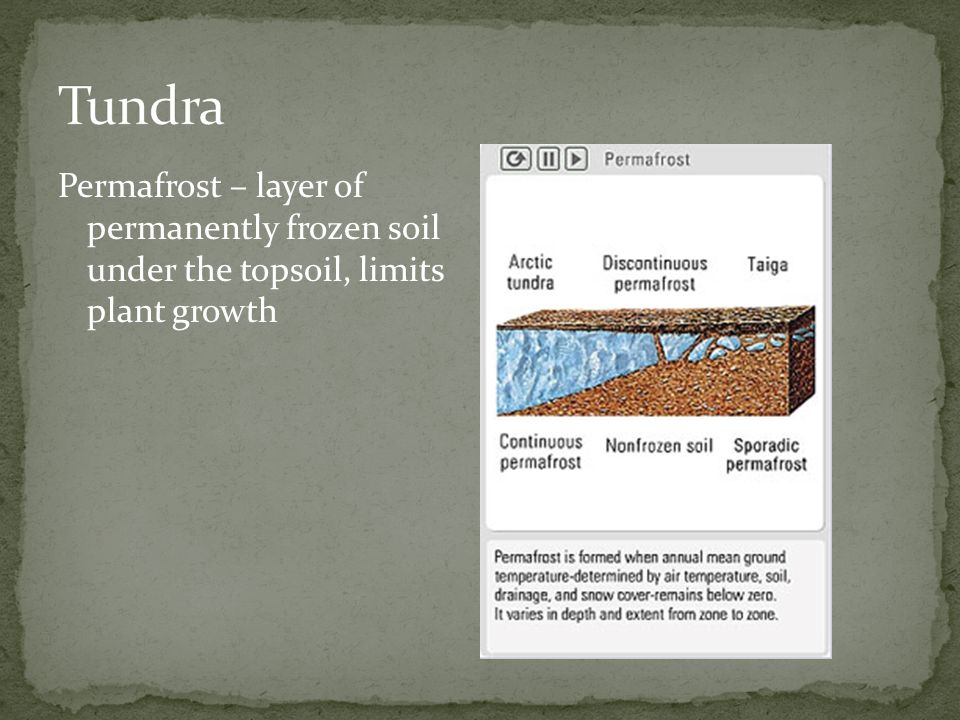 Tundra Permafrost – layer of permanently frozen soil under the topsoil, limits plant growth