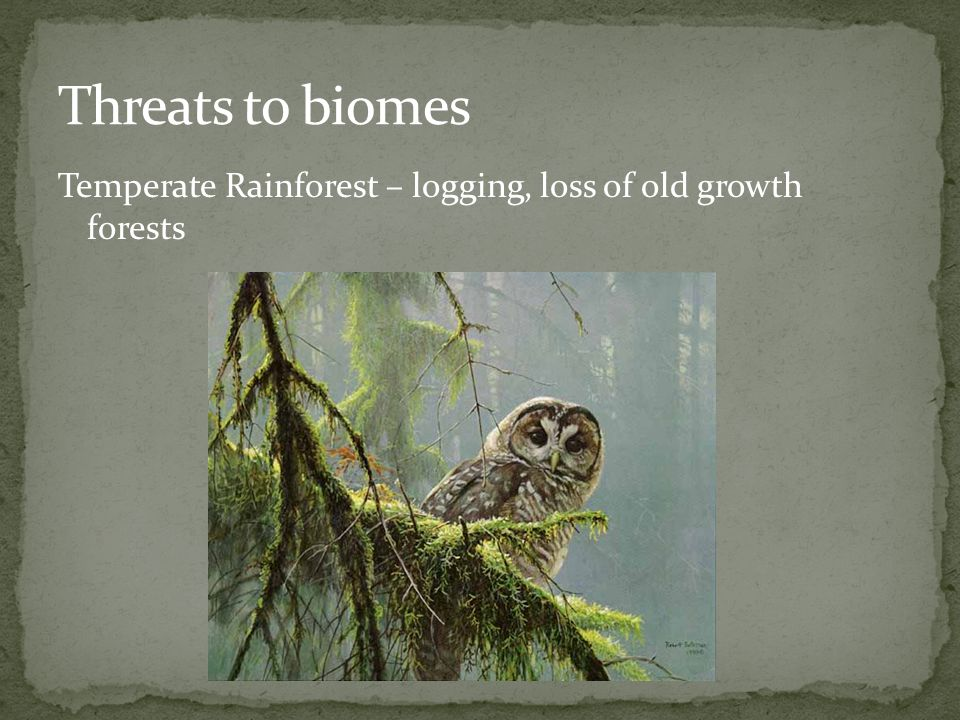 Threats to biomes Temperate Rainforest – logging, loss of old growth forests