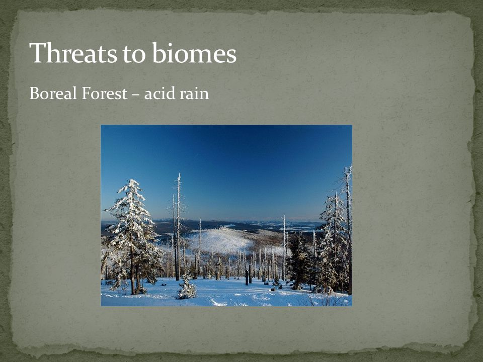 Threats to biomes Boreal Forest – acid rain