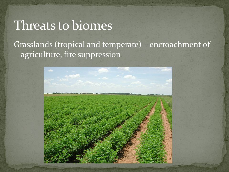 Threats to biomes Grasslands (tropical and temperate) – encroachment of agriculture, fire suppression.