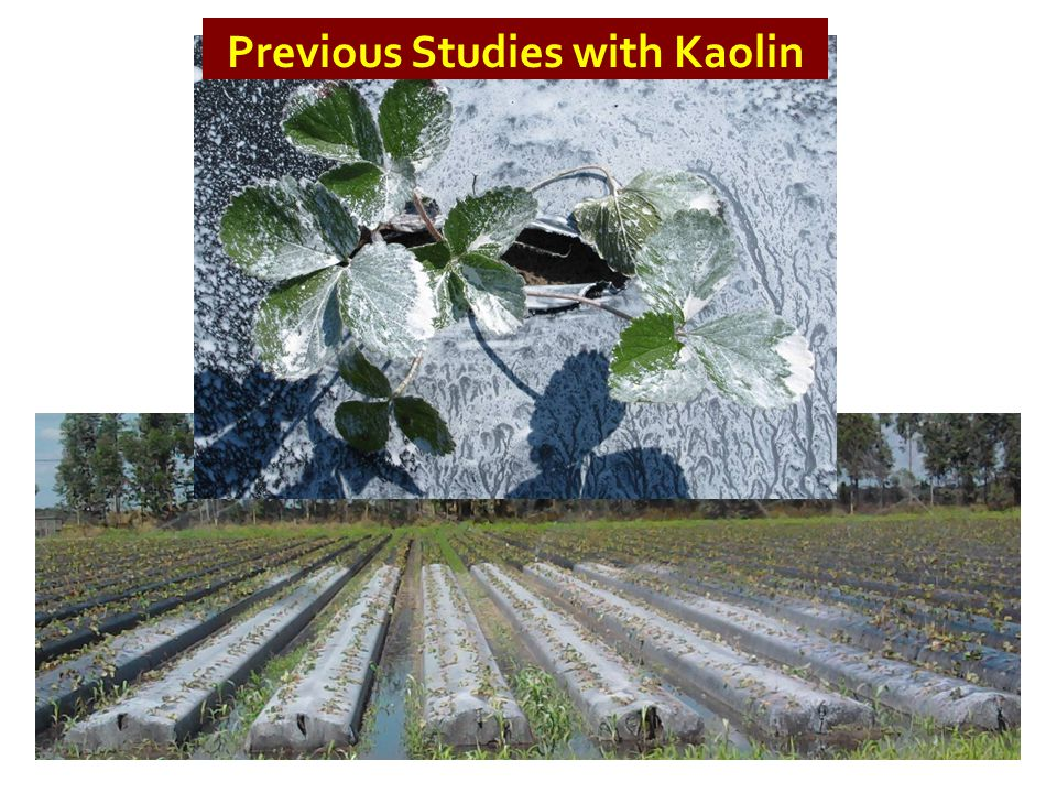 Previous Studies with Kaolin