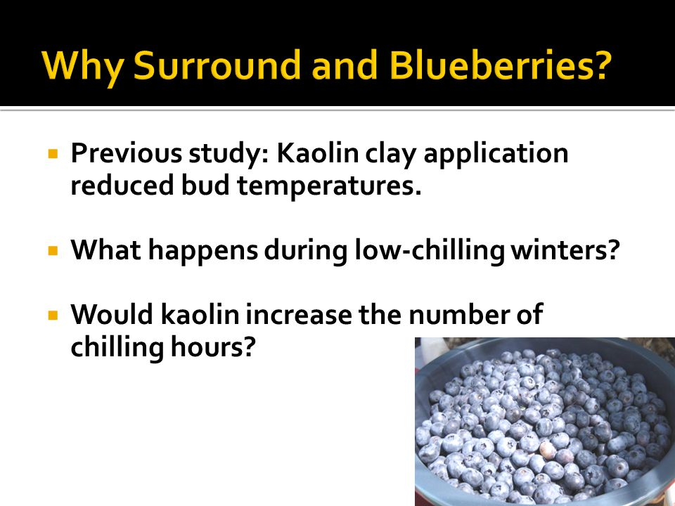 Why Surround and Blueberries
