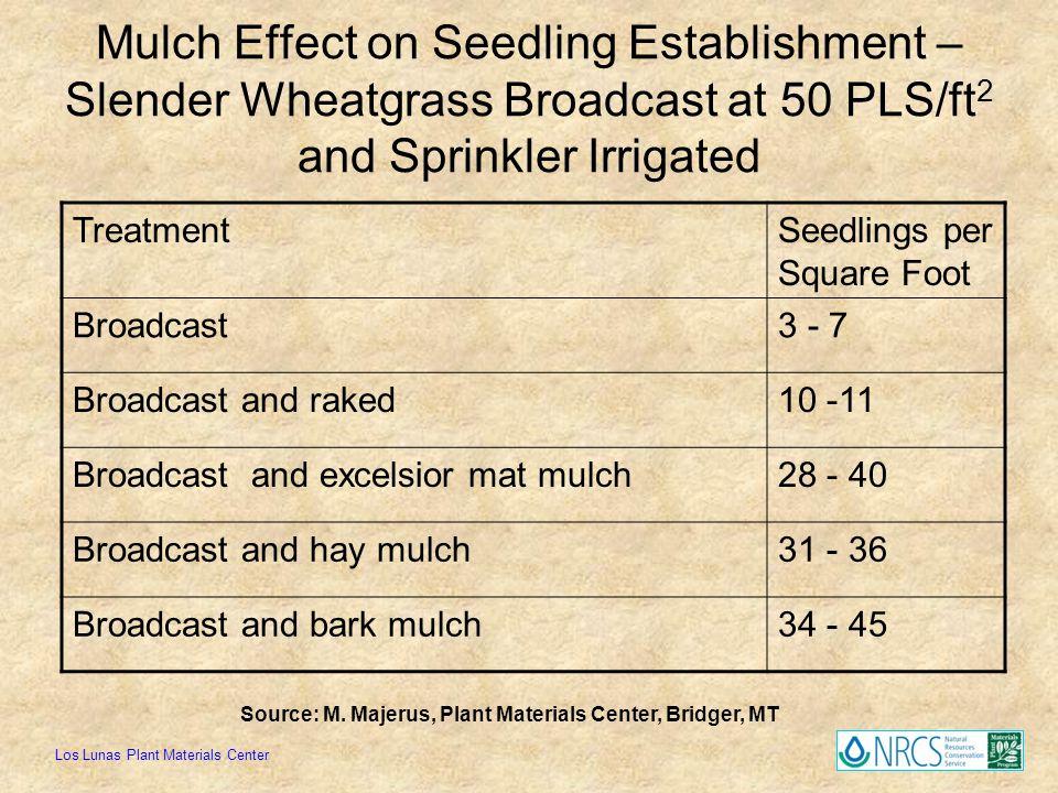 Mulch Effect on Seedling Establishment – Slender Wheatgrass Broadcast at 50 PLS/ft2 and Sprinkler Irrigated