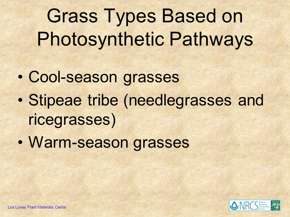 Grass Types Based on Photosynthetic Pathways