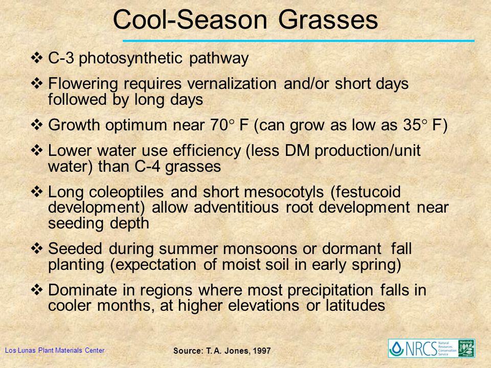 Cool-Season Grasses C-3 photosynthetic pathway