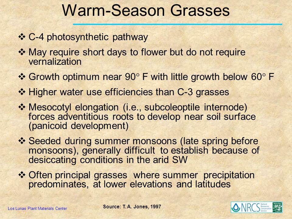 Warm-Season Grasses C-4 photosynthetic pathway