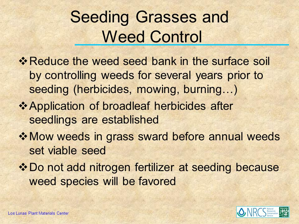 Seeding Grasses and Weed Control