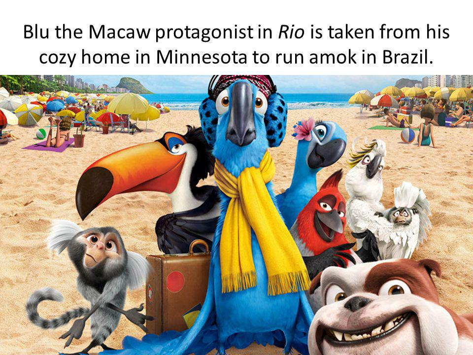 Blu the Macaw protagonist in Rio is taken from his cozy home in Minnesota to run amok in Brazil.