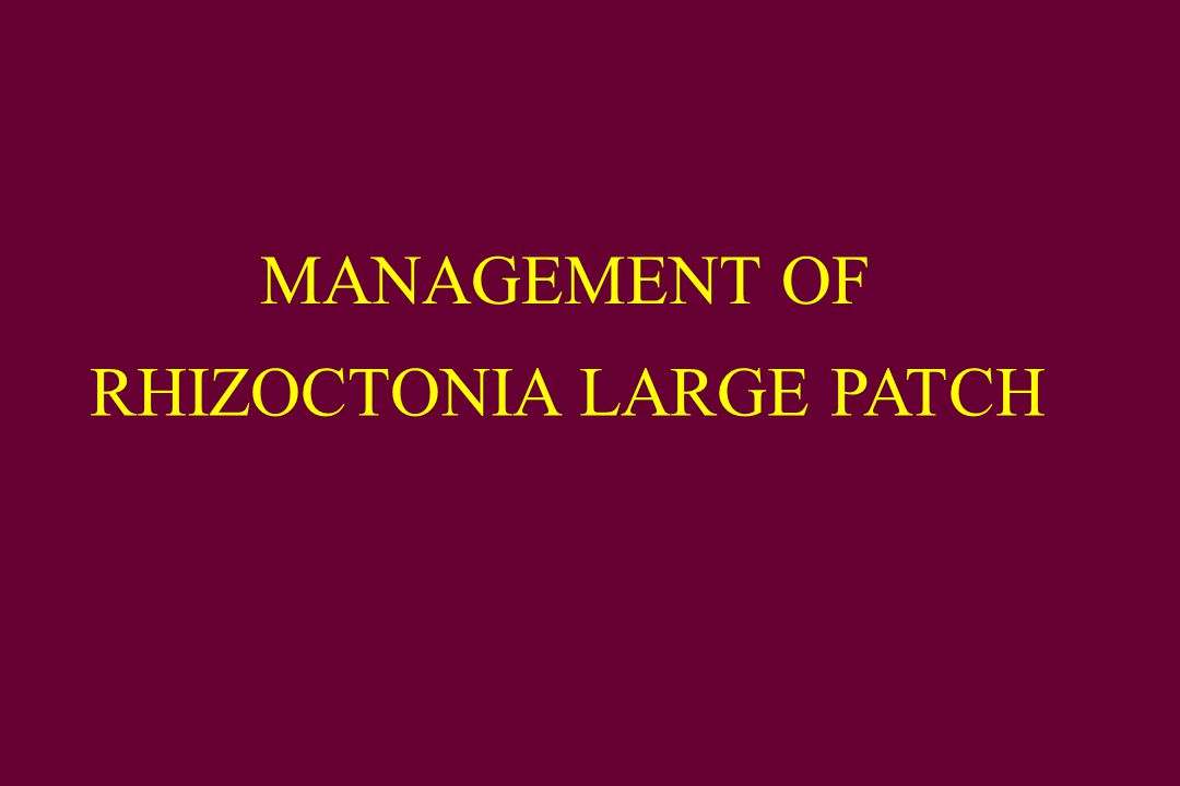 MANAGEMENT OF RHIZOCTONIA LARGE PATCH