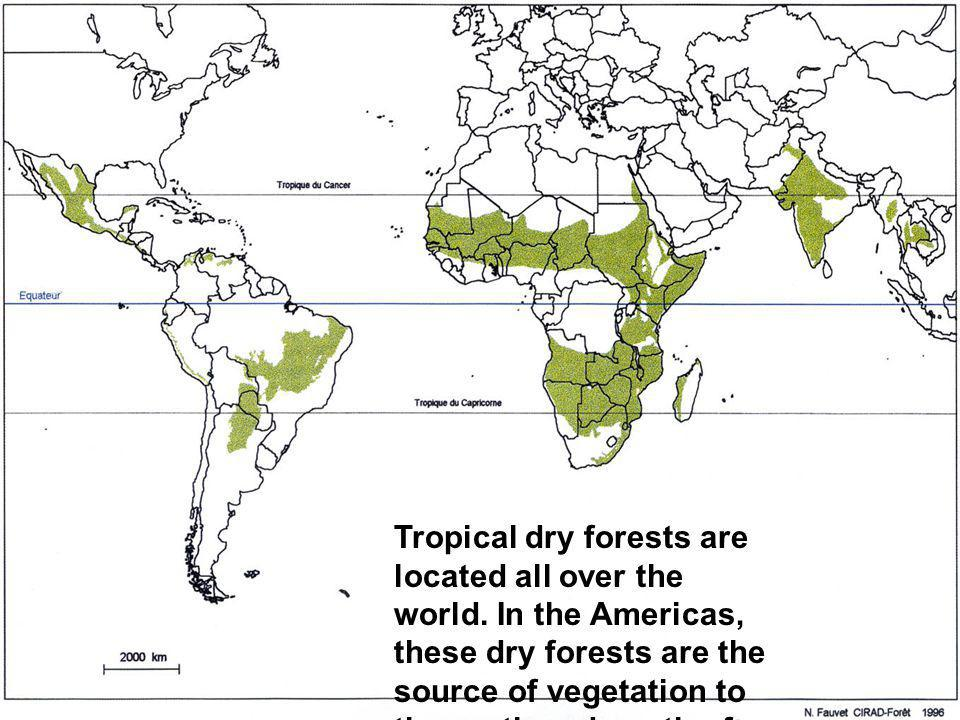 Tropical dry forests are located all over the world