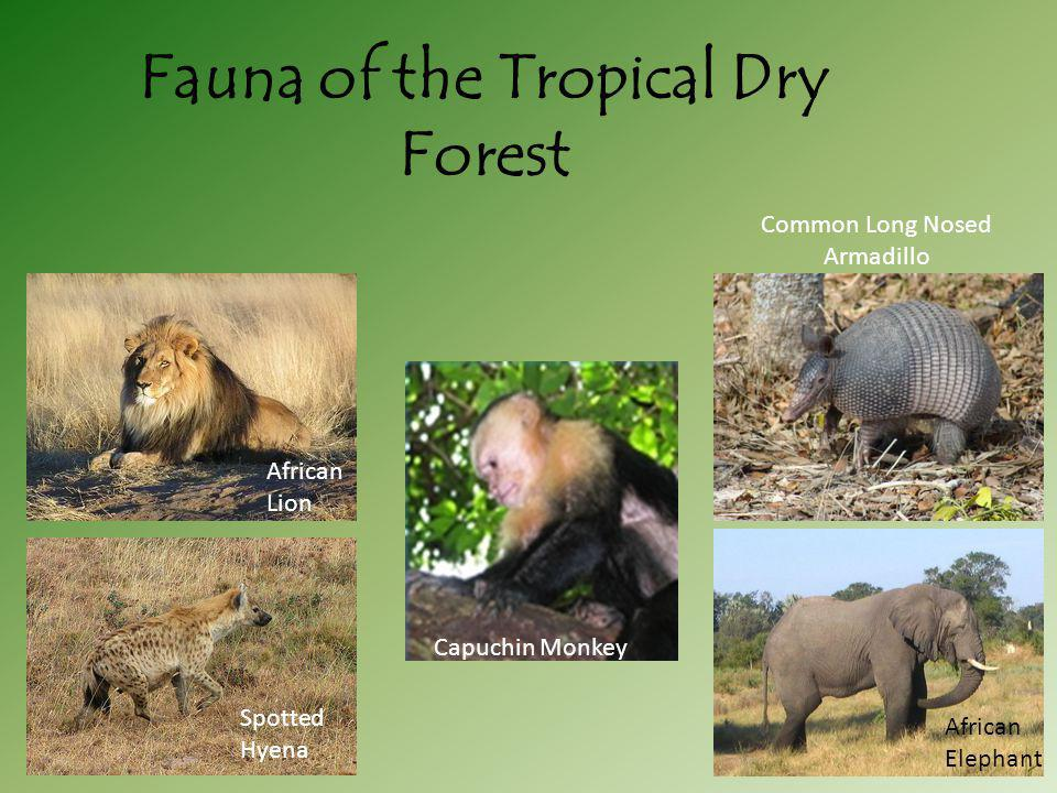 Fauna of the Tropical Dry Forest