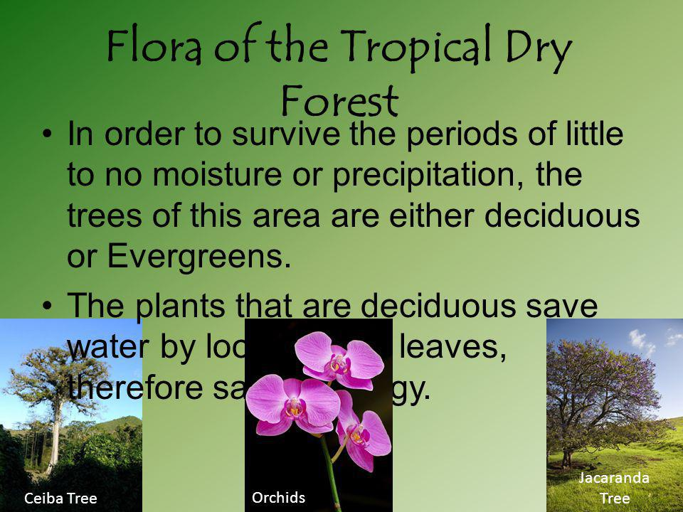 Flora of the Tropical Dry