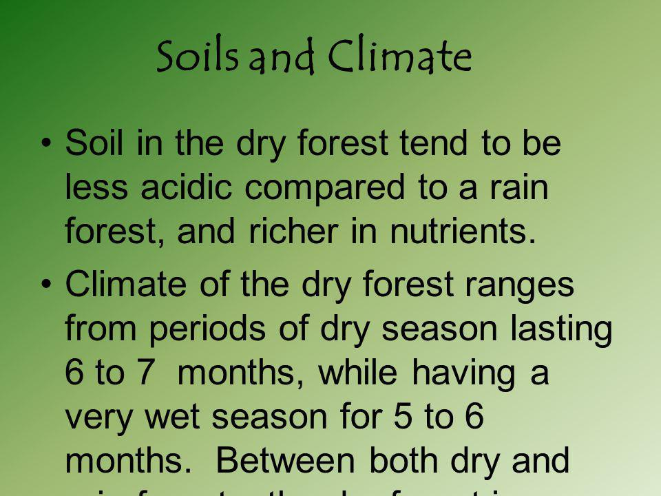 Soils and Climate Soil in the dry forest tend to be less acidic compared to a rain forest, and richer in nutrients.