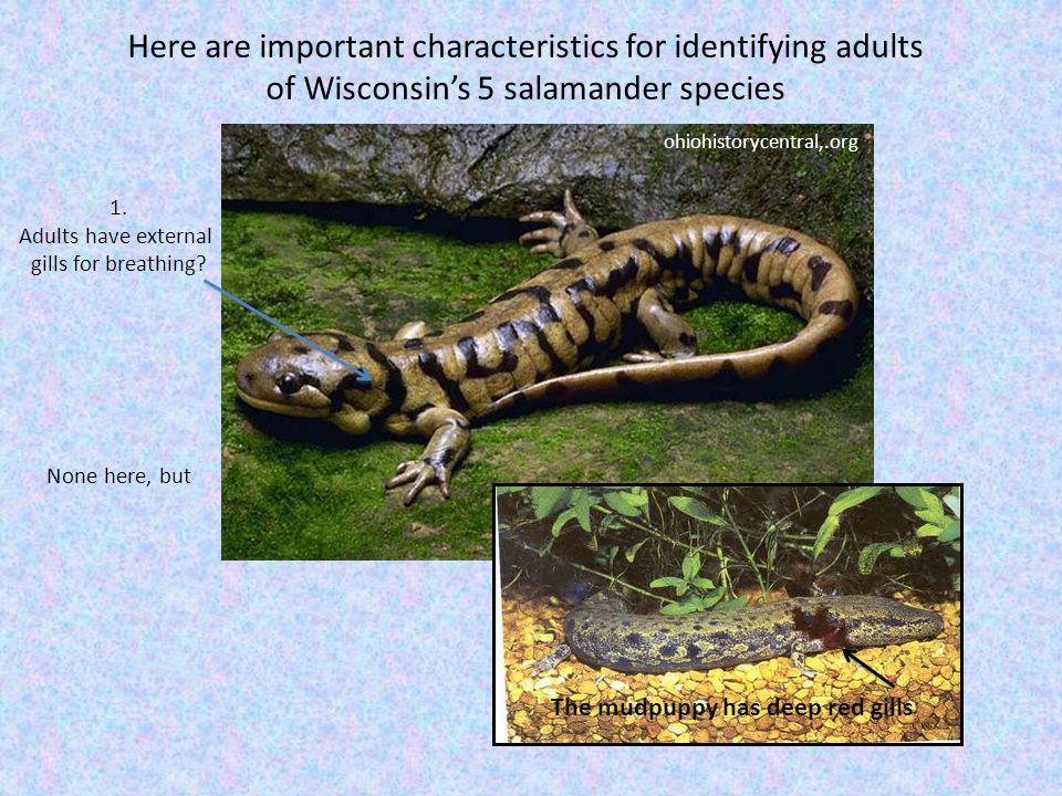 Here are important characteristics for identifying adults
