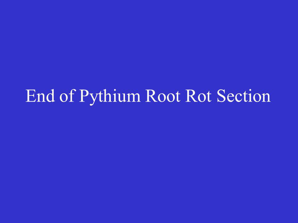 End of Pythium Root Rot Section
