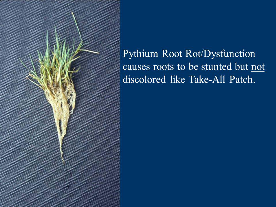 Pythium Root Rot/Dysfunction