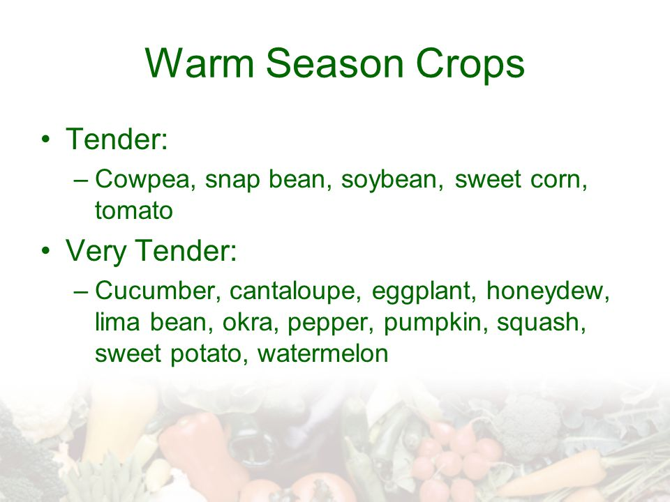 Warm Season Crops Tender: Very Tender: