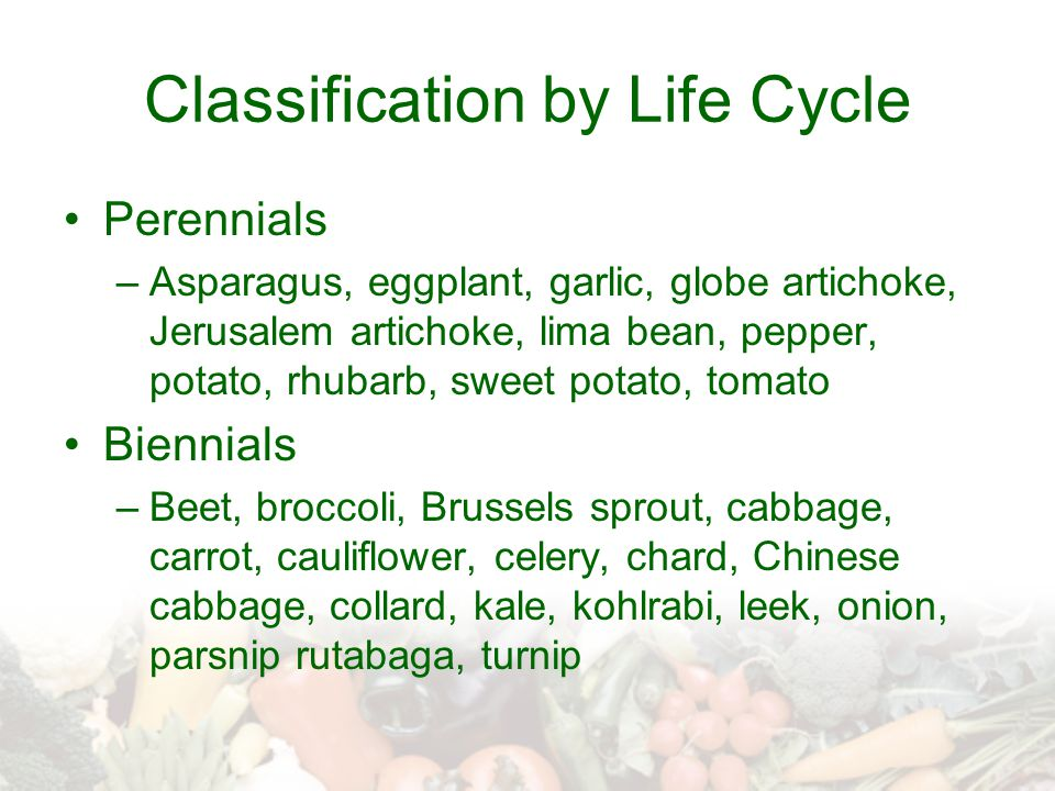 Classification by Life Cycle