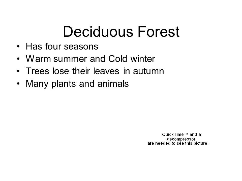 Deciduous Forest Has four seasons Warm summer and Cold winter