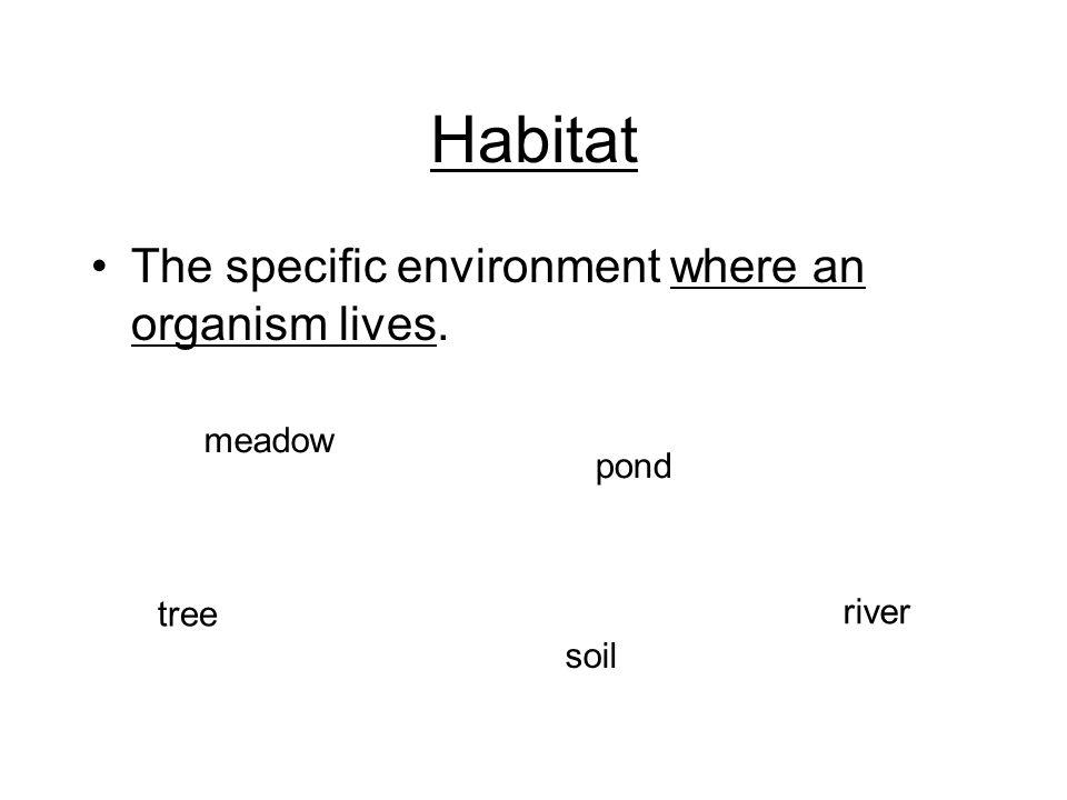 Habitat The specific environment where an organism lives. meadow pond