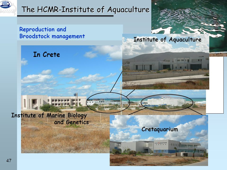 The HCMR-Institute of Aquaculture