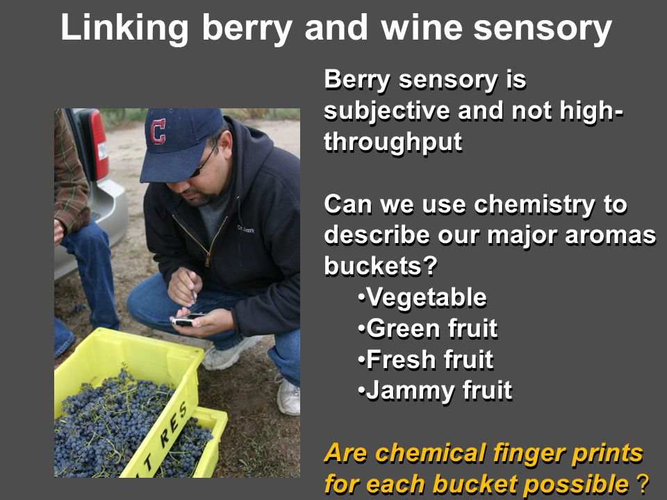 Linking berry and wine sensory