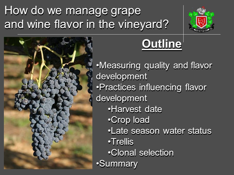 and wine flavor in the vineyard
