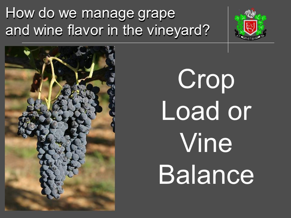 Crop Load or Vine Balance How do we manage grape