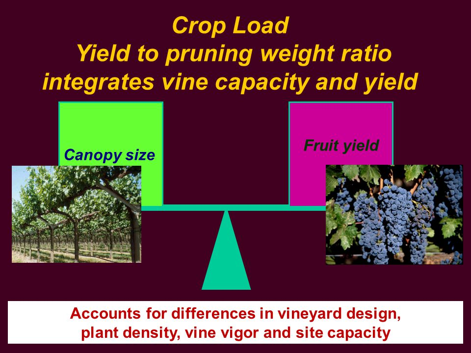 Yield to pruning weight ratio integrates vine capacity and yield