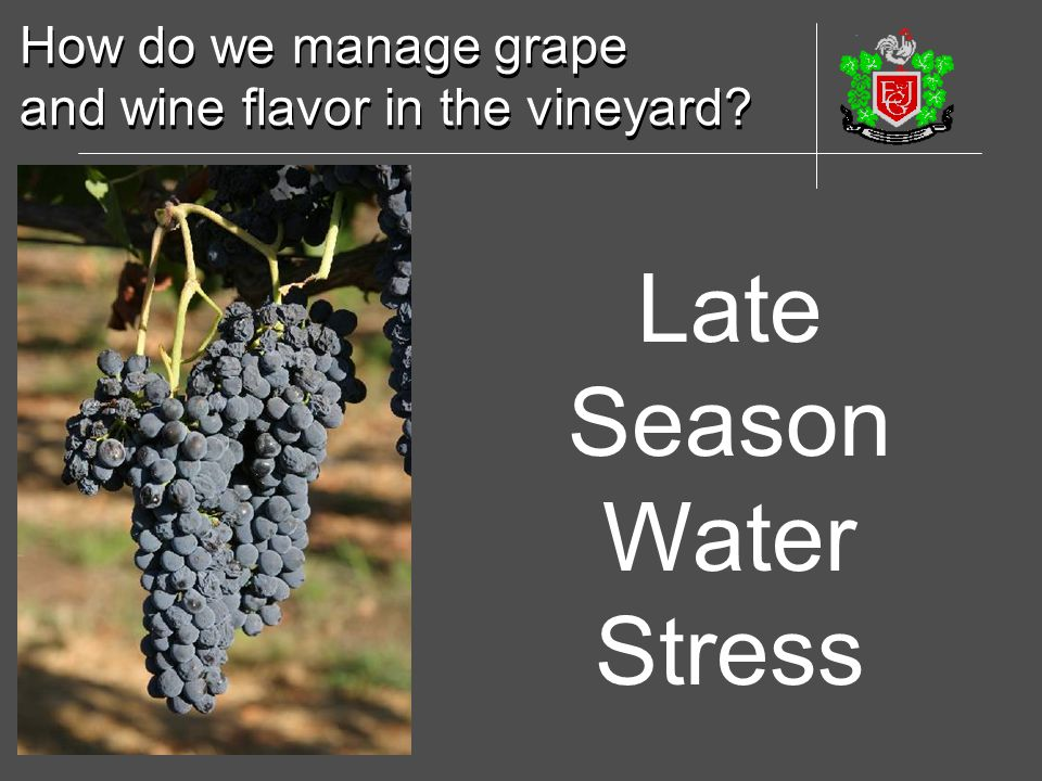 Late Season Water Stress How do we manage grape
