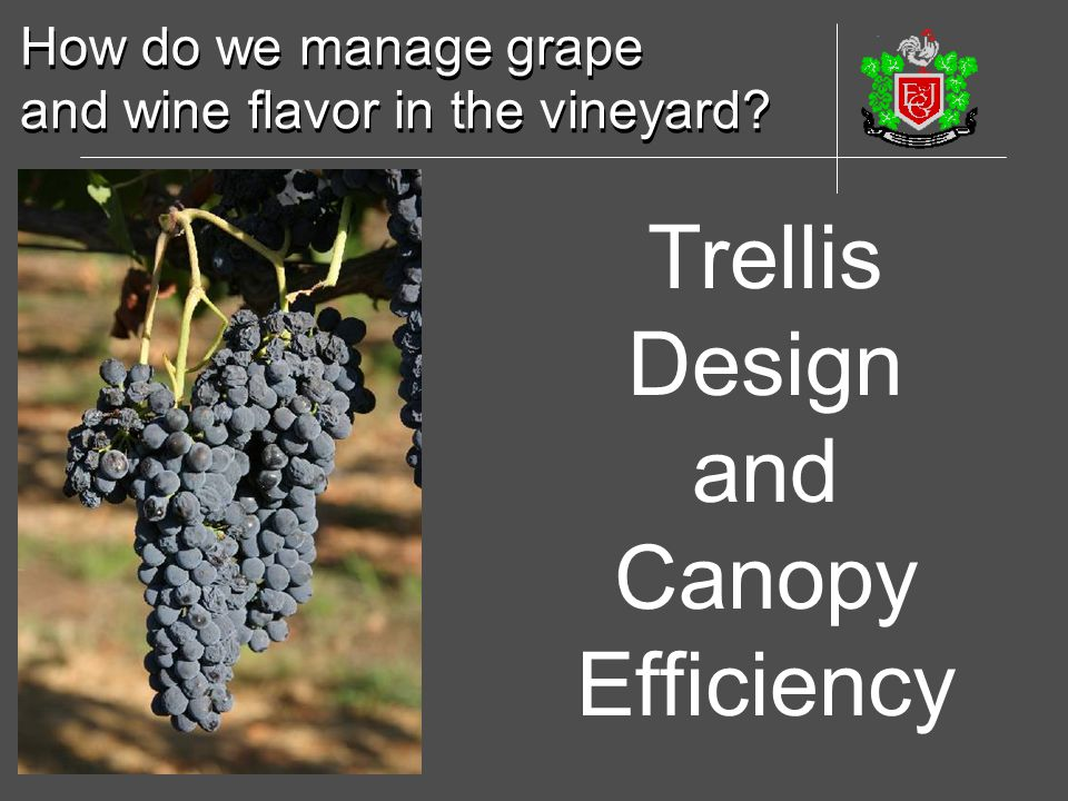 Trellis Design and Canopy Efficiency