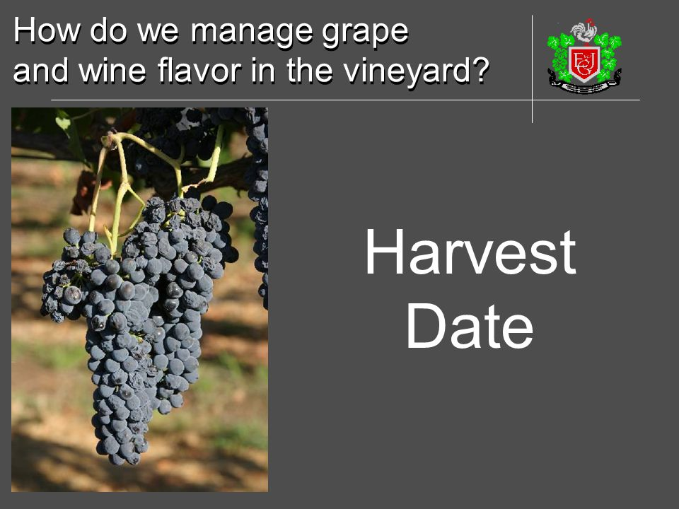 How do we manage grape and wine flavor in the vineyard Harvest Date